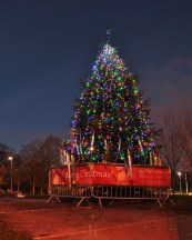 2014 Low Blantyre Christmas Tree by J Brown